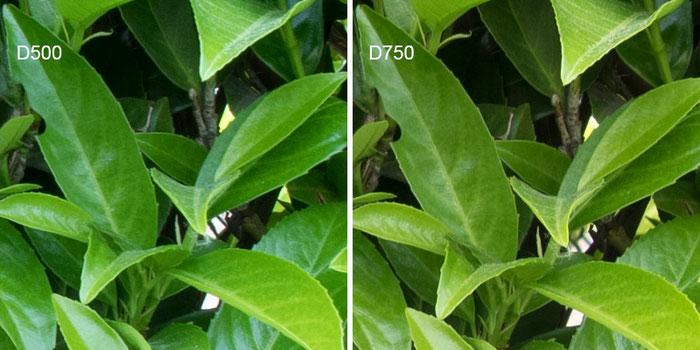 Praxistest NIKON D500: Testbild Blätterwand, Crop Bildmitte D500 vs. D750, Foto: bonnescape
