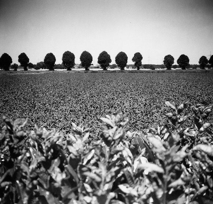 PURMA SPECIAL im Praxistest: Blick aufs Feld am Mittag bei hartem Sonnenlicht. Foto: Dr. Klaus Schörner