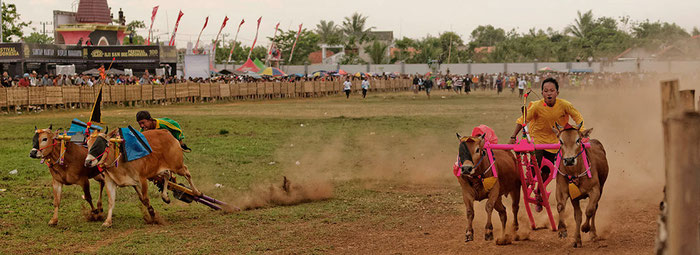 Bullenrennen auf der indonesischen Insel Madura. Copyright Rolf Lohmann. www.bonnescape.de