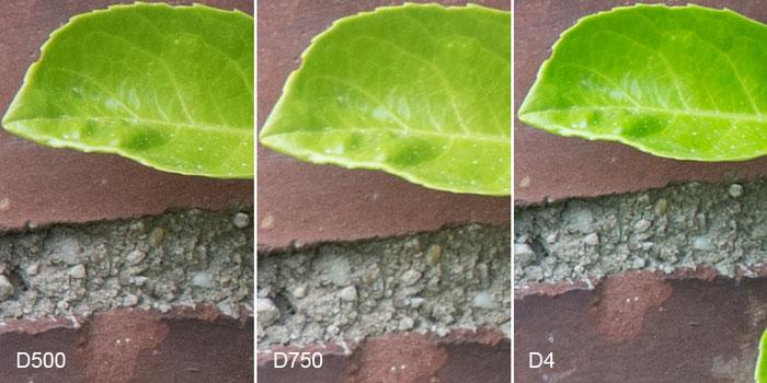 Praxistest NIKON D500: Testbild Mauermotiv, Crop Bildrand mit D750 vs. D4, Foto: bonnescape