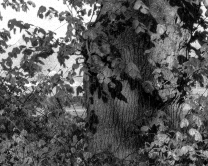 Ausschnitt Blende 16: Landschaftsaufnahme mit dem 95 Jahre alten Laack Polyxentar 6.8/135 mm, Foto: bonnescape.de