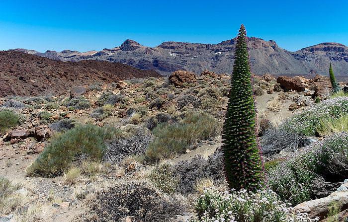 Arenas Negras mit Rotem Teide-Natternkopf im Teide-Nationalpark. Landschaftsfoto mit Leica M9 und 35 mm Zeiss Biogon. Foto: Klaus Schoerner