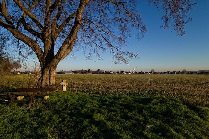 Praxistest: Landschaftsaufnahme Baum mit Wegekreuz am frühen Morgen, VOIGTLÄNDER 3,5/21mm SKOPAR Asphärisch VM auf LEICA M9, www.bonnescape.de