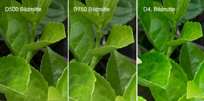 Praxistest NIKON D500: Testbild Mauermotiv, Crop Bildmitte mit D750 vs. D4, Foto: bonnescape