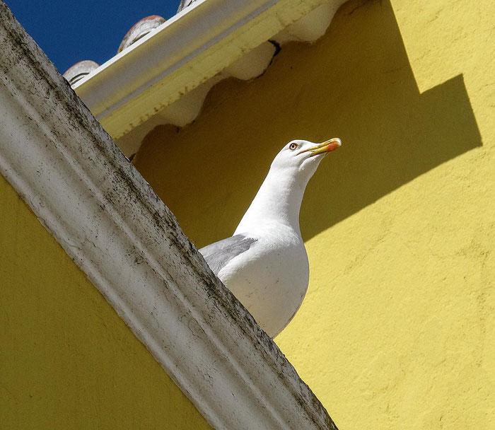 Reisefotografie Algarve / Lagos: Mit minimalen symbolischen Mitteln Reise- und Urlaubs-Feeling wecken, Canon G11, Foto: Dalyani Schoerner