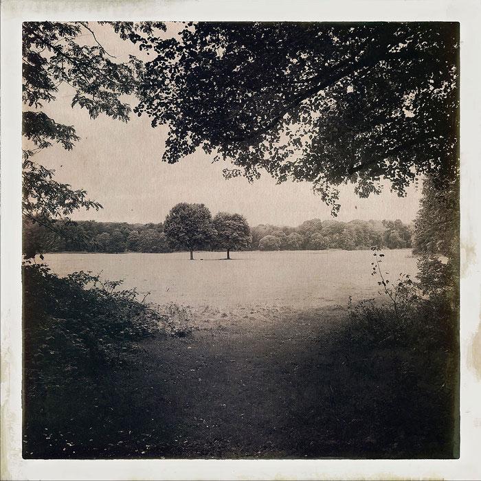 Die Lichtung. Hipstamatic-Aufnahme. Copyright 2019: Dr. Klaus Schörner