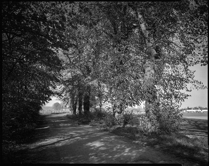 Landschaftsaufnahme mit dem 95 Jahre alten Laack Polyxentar 6.8/135 mm, Foto: bonnescape.de