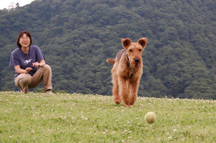 愛川公園でボール遊び