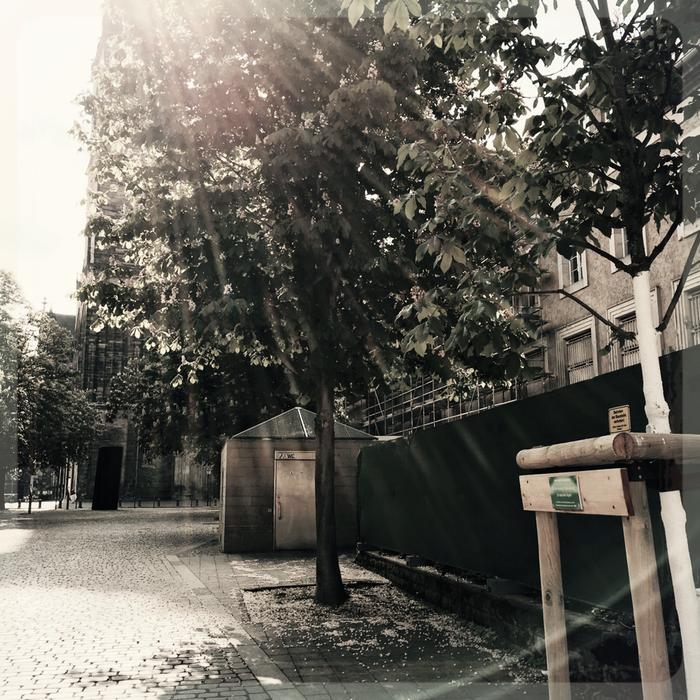 Ein Baum für Frank Giering:Lothar-Kreyssig-Straße, Magdeburg