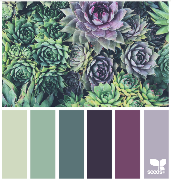 Succulent hues on www.design-seeds.com