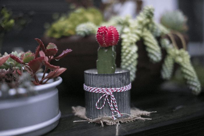 Cactus en gros plan posé sur une table avec d'autres plantes