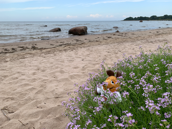 Am Ostseestrand
