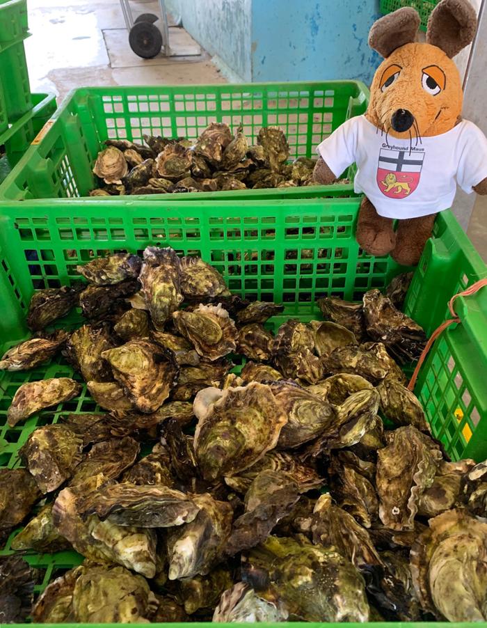 Neben dem Restaurant wurden die Austern direkt verkauft - aber so stillos will der Greyhound sie nicht essen !