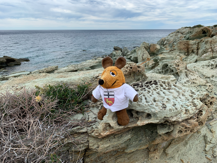 Neben dem Strand gab es diese löchrigen Felsen - nein, es sind keine Mauselöcher !!