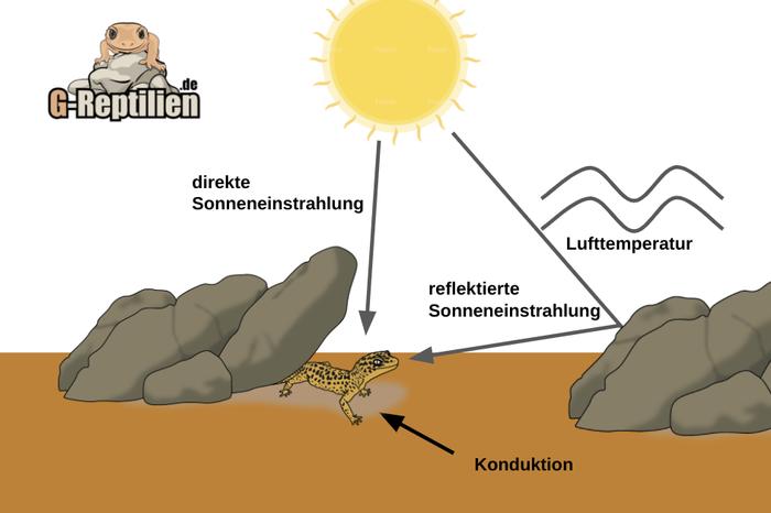 Leopardgecko Lebensraum Habitat Sonne Wärme Lufttemperatur temperatur Konduktion