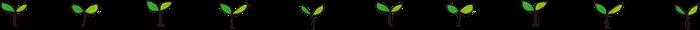 双葉の罫線