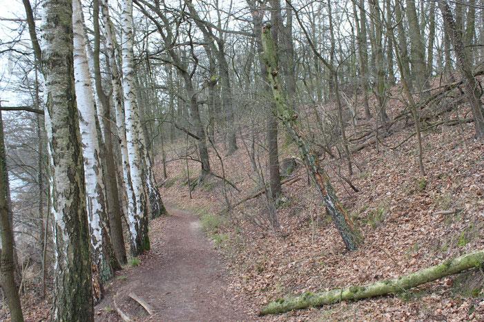 Der Wanderweg selbst schmal und uneben, halt wie ein richtiger Waldweg eben verläuft.