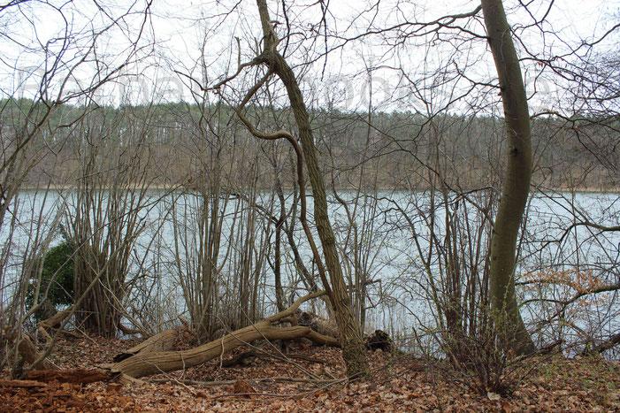 Entlang am See auf dem Wanderpfad ist die Vegetation sich selbst überlassen. Nur ab und zu werden Bäume gefällt, die die Sicherheit der Wanderer gefährden. Totholz wird aber für die nachwachsende Vegetation liegengelassen.
