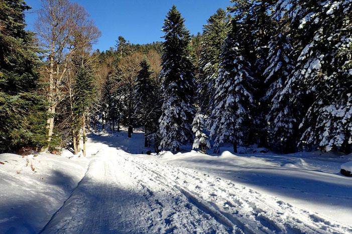 Retour sur la grande piste enneigée.