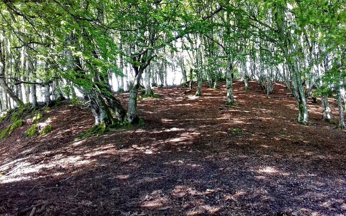 Passage dans les bois avant d'arriver...