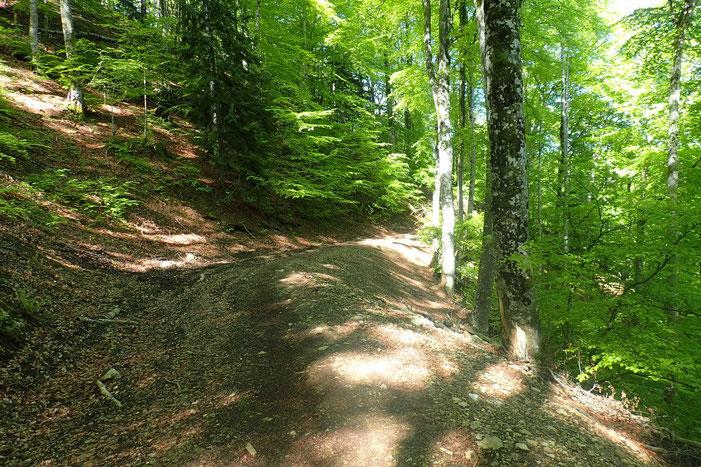 Contournement par le Nord du Monné via un chemin forestier.