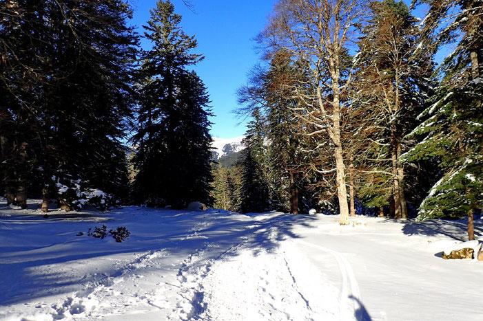 Passage par la forêt.