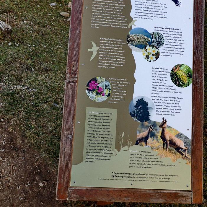 Aux abords du lac, il y a de nombreuses informations sur la faune, la flore, la géologie...