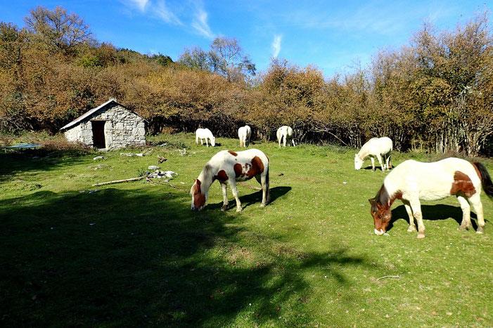 J'y retrouve les chevaux.