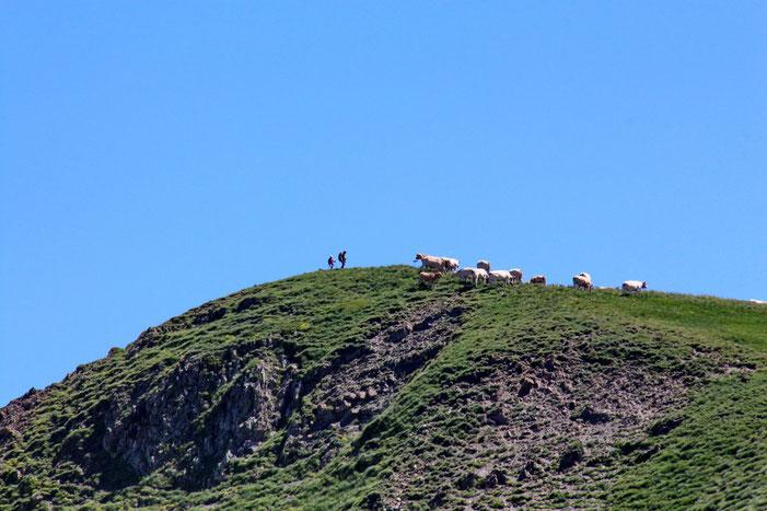 Les randonneurs au Pic de Chérue avec les bovidés.