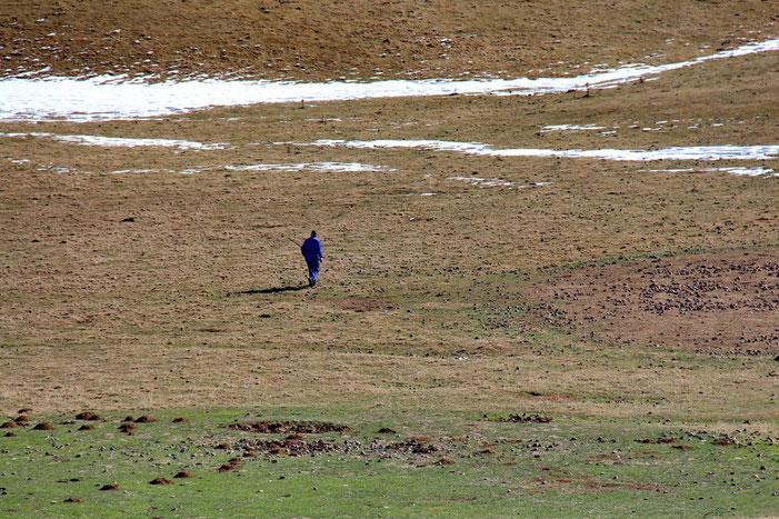 Un berger espagnol à la recherche de ses vaches...