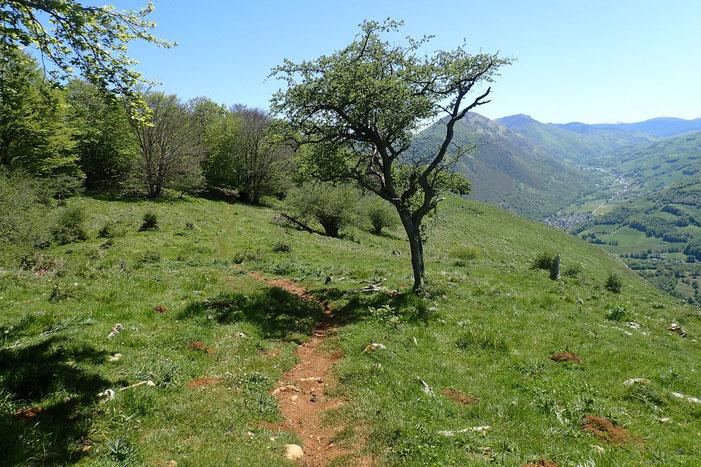Descente par le flanc Est avec vue sur la Vallée de Campan.