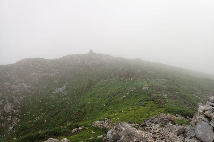 Voilà le cairn sommital du Casque du Lhéris (1595m). Dans la brume.