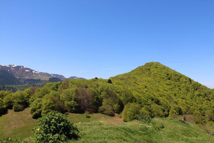 Le Monné, très boisé (sauf sur son versant Sud).
