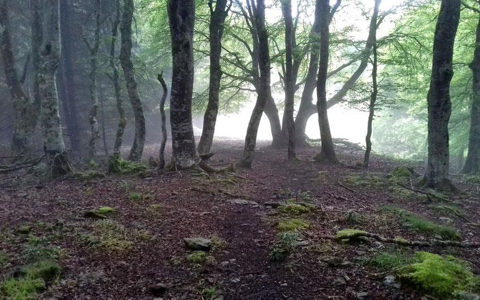 A travers le bois, la clairière où il faut que je tourne.