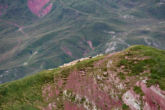 Les moutons sont toujours sur le Pic de Mayou.