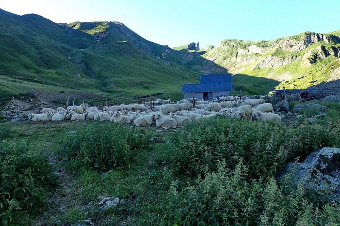Apparemment, les moutons sont montés aux pâturages.