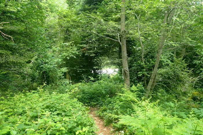 Et au bout de la forêt, la route.