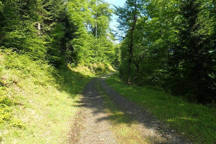 La piste qui serpente à travers le bois est très confortable. Le soleil est pour le moment présent...