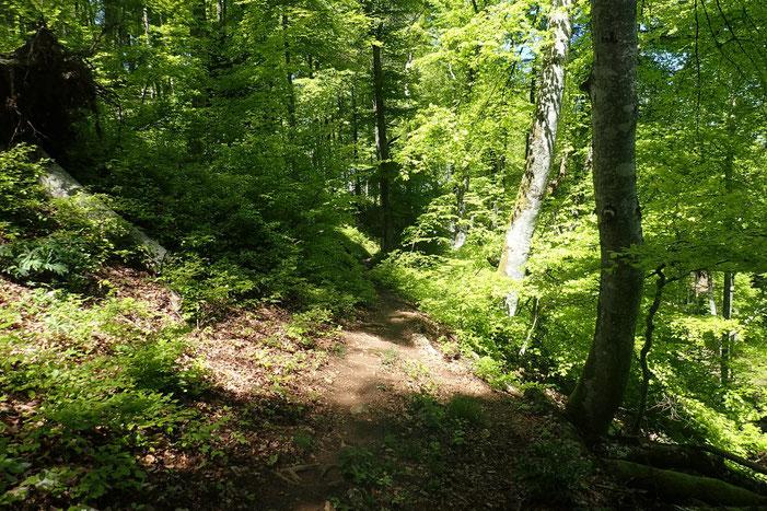 Passage à travers bois.