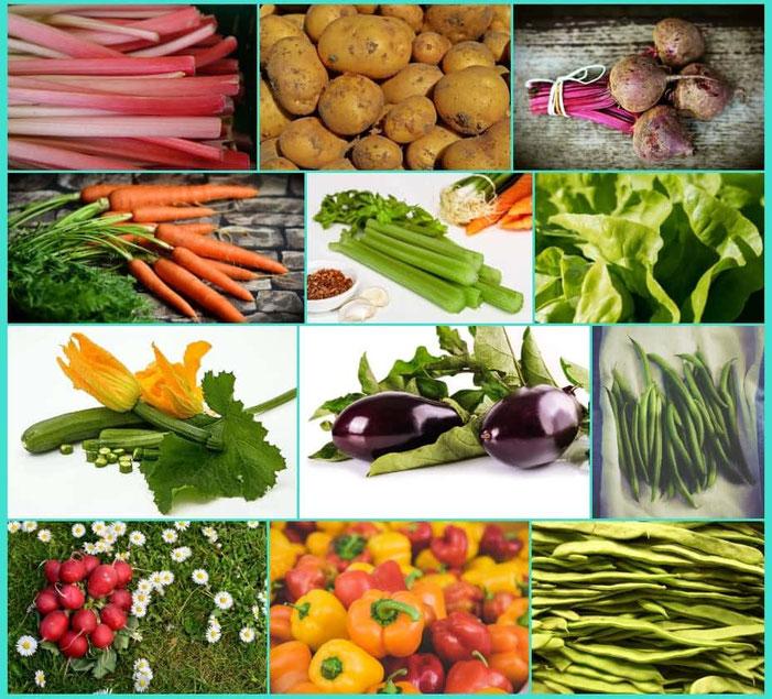 Foto con tante verdure della stagione di ottobre