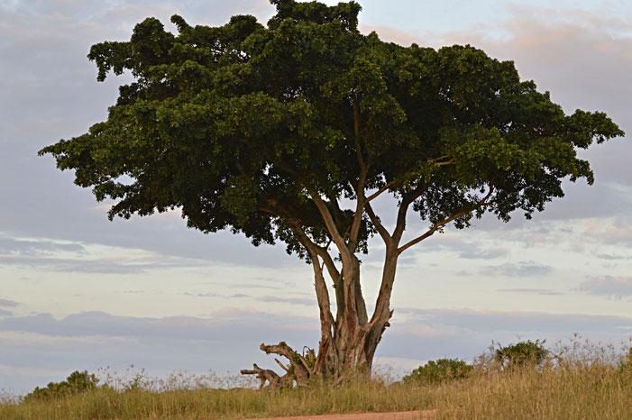 Heuschrecken Südafrika Reisebericht Blog Insekten