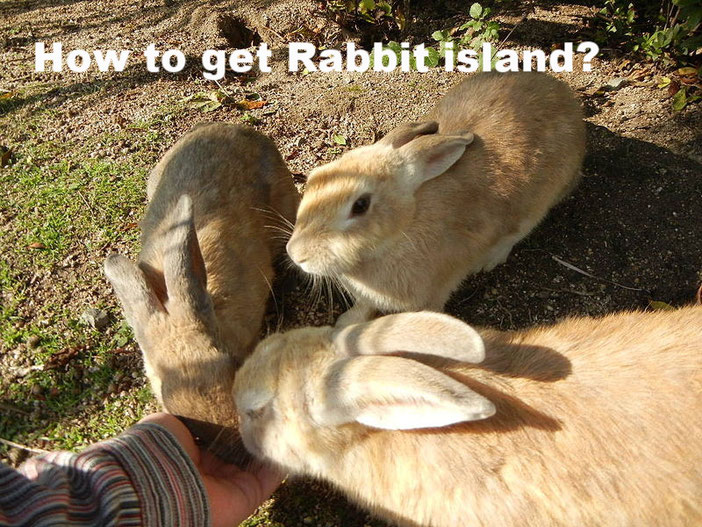 Rabbit island in Japan  Source: Wikipedia