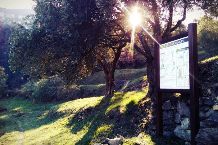 Sentier des Oliviers et Roc de Capio au départ de Ginoles