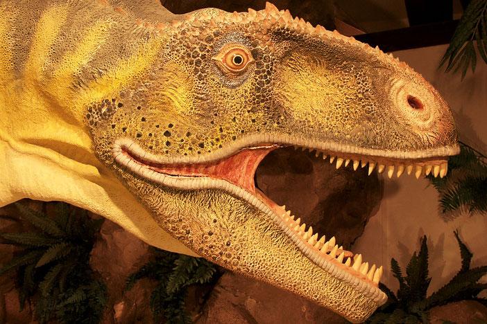Musée des Dinosaures d'Espéraza, Aude