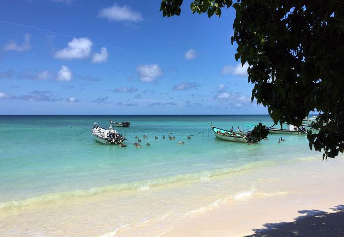 TobagoTours bietet Ausflüge und Landgänge für Touristen und Gäste von Kreuzfahrten auf Tobago in der Karibik an. Katharina Dumas führt die Touren in Deutsch und Englisch durch. Langjährige Erfahrung macht jeden Ausflug zum Erlebnis.