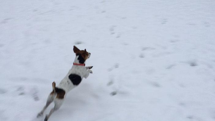 je découvre la neige...