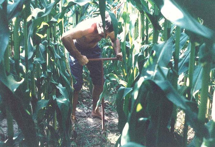 irrigation, eau, gravimétrie, maïs