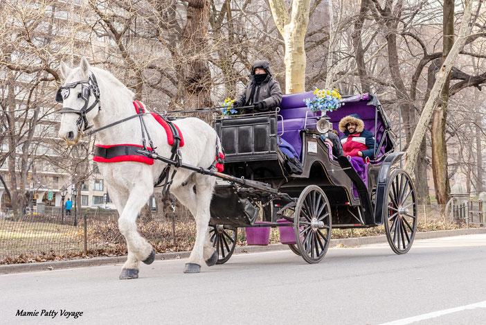 Balade en calèche, Central Park, New York