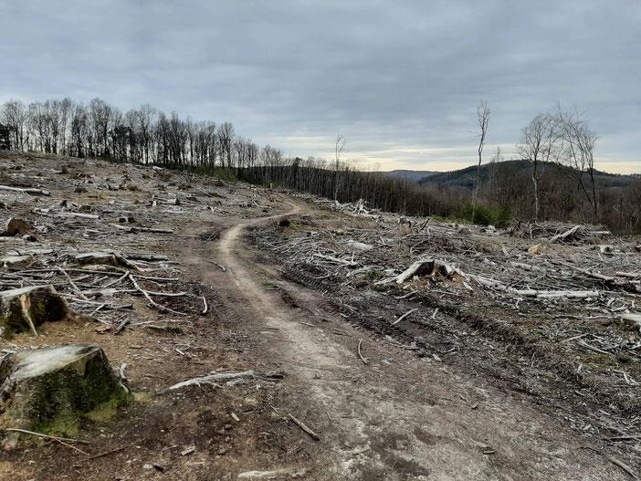 Bundesweite Waldschäden: Kahlschlagfläche Gemeinde Engelskirchen