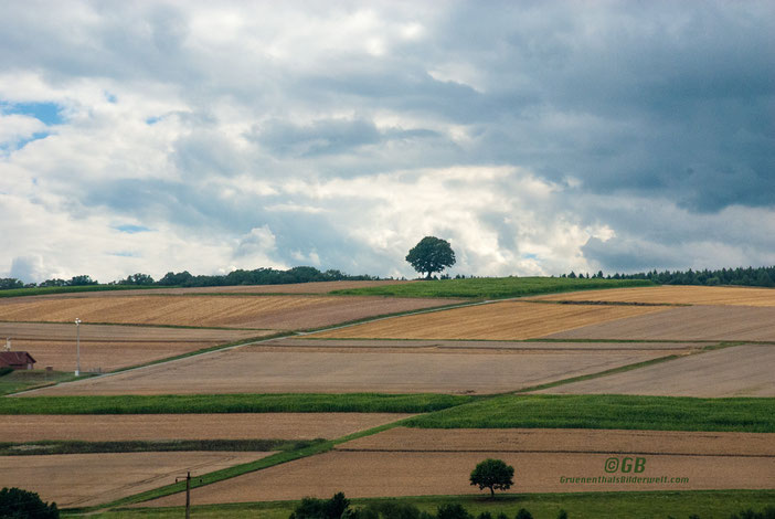 Felder, Bäume und Himmel